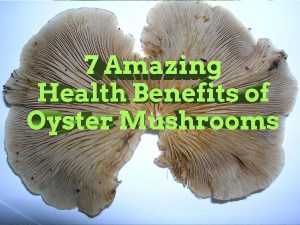 Seven amazing health benefits of oyster mushrooms